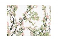 Vallila käsipyyhe Omenapuu 50x70 rose