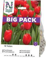 Nelson Garden tulppaani Triumf punainen 18 kpl