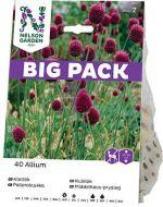 Nelson Garden pallerolaukka Allium 40 kpl